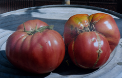 The story of the 3945 tomato found on WWII battlefield