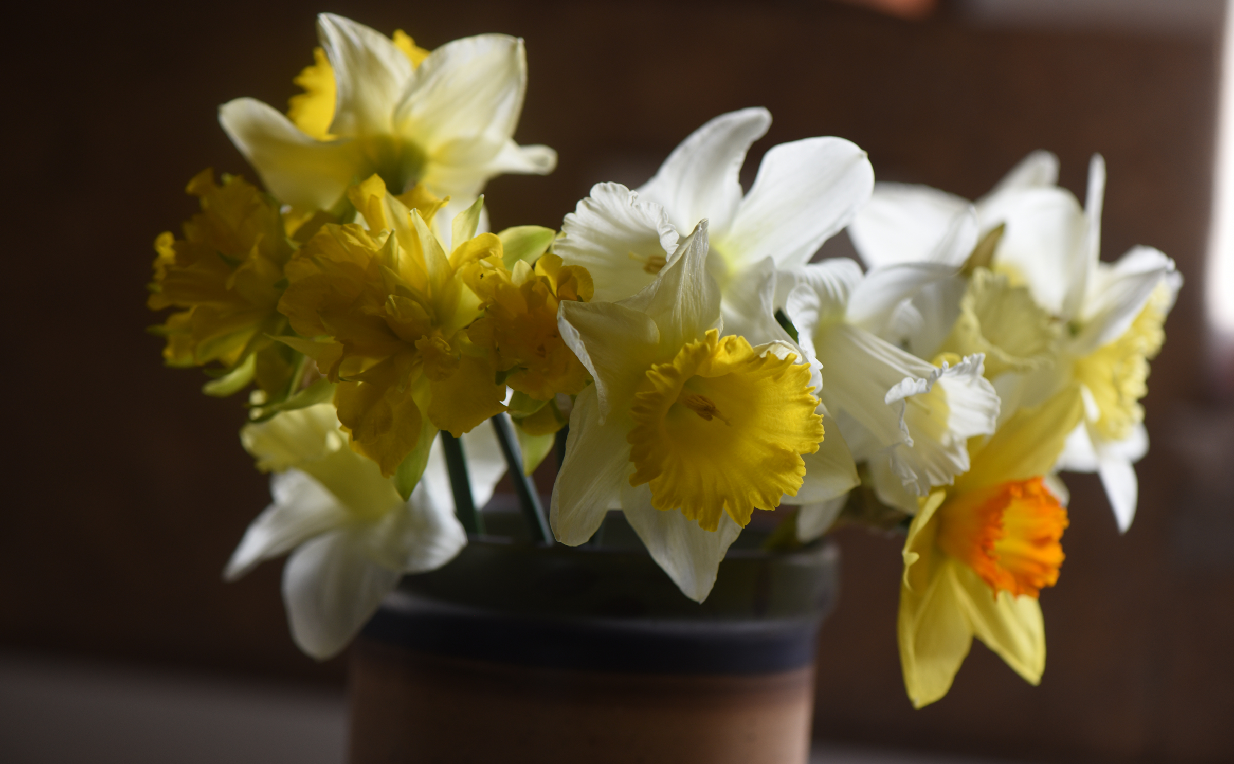 In Doug's Garden: Making Daffodils Last in Your Home