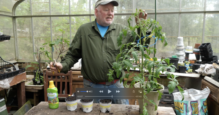 In Doug's Garden: Making more tomato plants