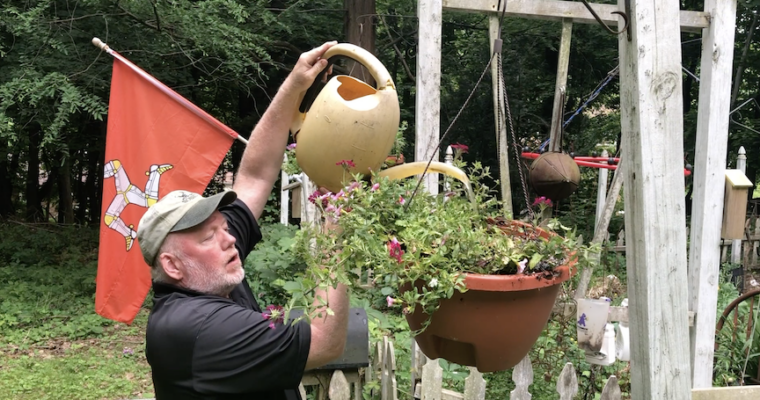 In Doug's Garden: Bargain hanging basket fun!