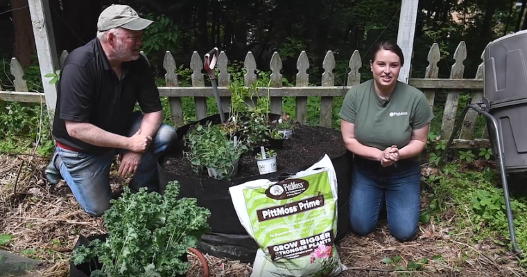 Planting a container with Pitt Moss