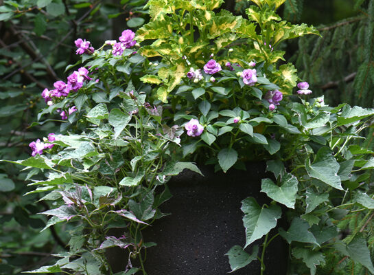 Container planting 101 for flowers and veggies as seen on PTL