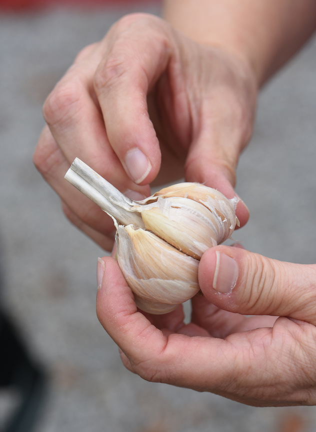 How to plant garlic this fall for five harvests