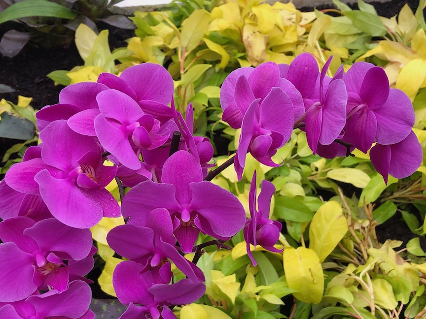 Tour the Orchid and Tropical Bonsai Show at Phipps
