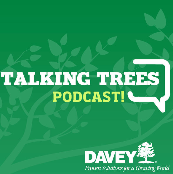 This week's Talking Trees podcast: Winter Walk Through and stewartia love!