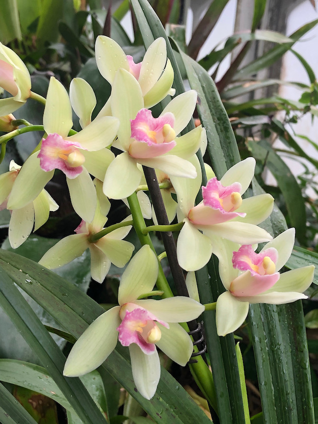 This beautiful orchid reveals a touching story
