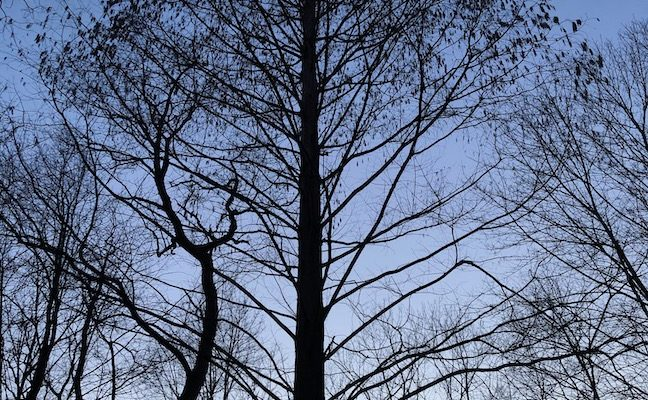 Talking Trees podcast: Teaching kids the importance of trees