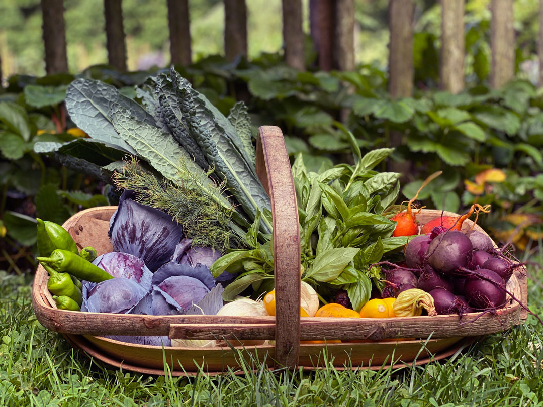 Chanticleer Garden designs with vegetables as COVID begins. Donates nearly 5000 pounds of produce.