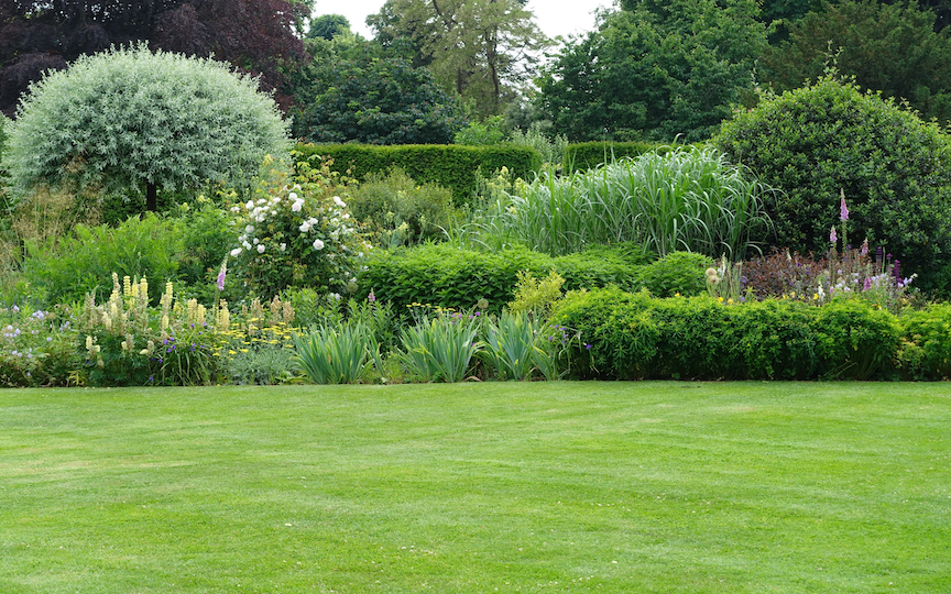 Everything You Need to Know About Growing A Lush, Organic Lawn