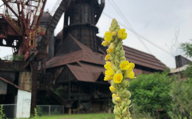 Garden Restores Once Scarred Landscape at the Carrie Blast Furnaces in Pittsburgh