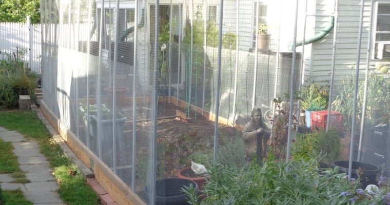 Tired of varmints, he built a cage around his garden.